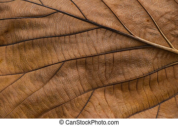 hoja, otoño, textura, venas, marrón