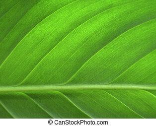 hoja, primer plano, verde