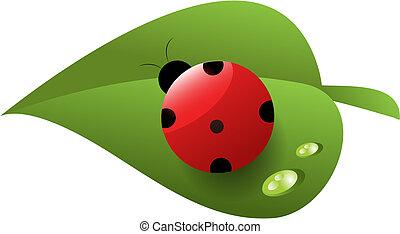 hoja, rocío, mariquita, rojo verde, manchado