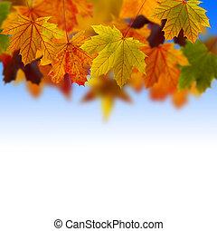 hojas caídas, cielo