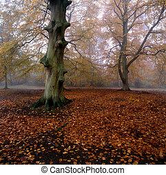 Hojas caídas en un bosque