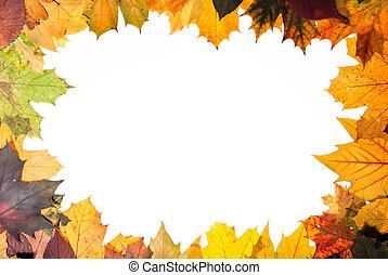 Hojas coloridas de otoño