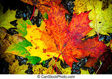 Hojas de aluminio de color de otoño en el grou