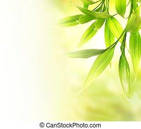 Hojas de bambú verdes sobre fondo borroso abstracto