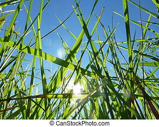 Hojas de hierba contra un cielo azul
