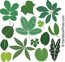 Hojas de hojas tropicales