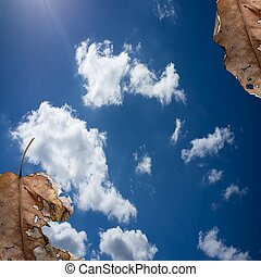 Hojas de otoño en el fondo del cielo azul