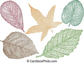 Hojas de otoño, vector