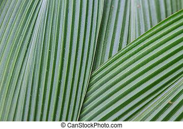 Hojas de palma verde