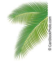 Hojas de palmera en blanco. Ilustración del vector.