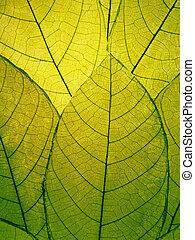hojas, delicado, detalle, verde