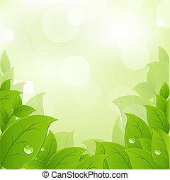 Hojas frescas y verdes