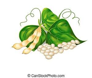 ), (, hojas, frijoles, soja, riñón