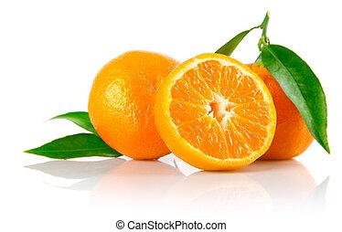 hojas, mandarina, aislado, verde, fruits, fresco