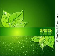 hojas, plano de fondo, verde, el rocío cae