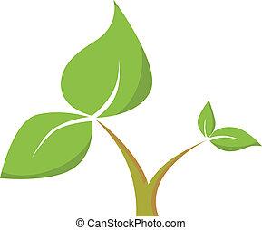 hojas, tallo