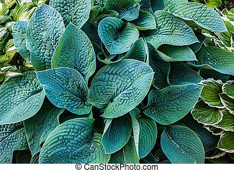hojas, verde, textura, garden., plantas