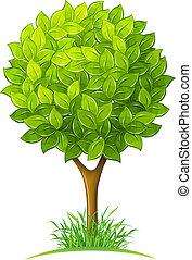 hojas verdes, árbol