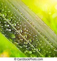 Hojas verdes con gotas de agua en un fondo natural soleado
