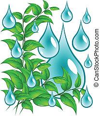 Hojas verdes con gotas de agua
