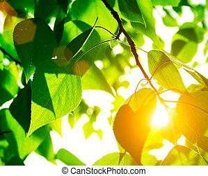 Hojas verdes con rayos de sol