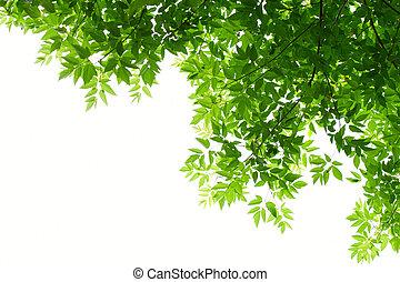 Hojas verdes de fondo blanco