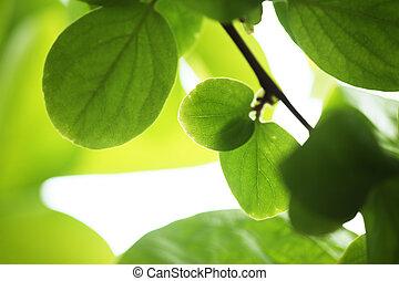 Hojas verdes de fondo