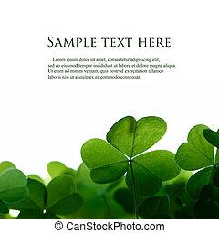 Hojas verdes de trébol bordean con espacio para el texto.