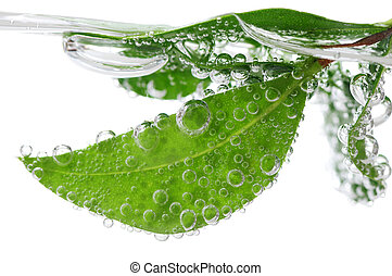 Hojas verdes en agua