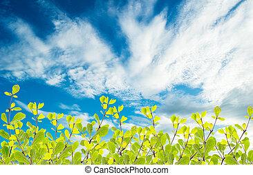 Hojas verdes en el fondo del cielo