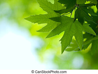 Hojas verdes, enfoque superficial