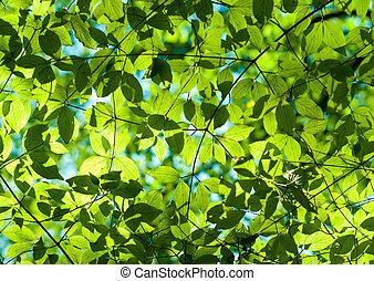 Hojas verdes frescas en el bosque