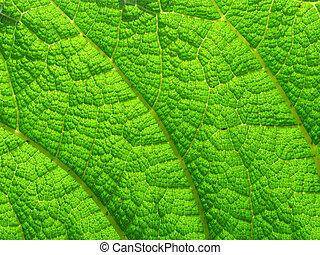 Hojas verdes macro