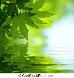 Hojas verdes reflejadas en el agua, enfoque superficial