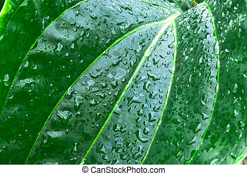 Hojas verdes tropicales, fondo abstracto