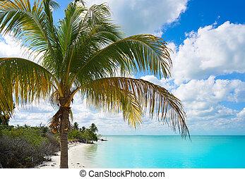 Holbox Island Paradise Palm Beach Palm Tree México