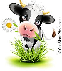 holstein, pasto o césped, vaca
