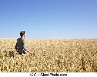 Hombre caminando en el campo de trigo