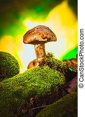 Hongos oscuros en musgo con un sombrero mojado fondo borroso