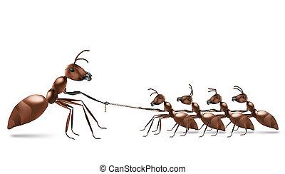 hormiga, soga, tirar