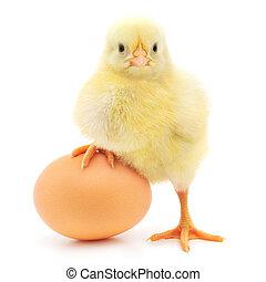 huevo de pollo