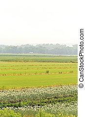Humedad de la granja de verano