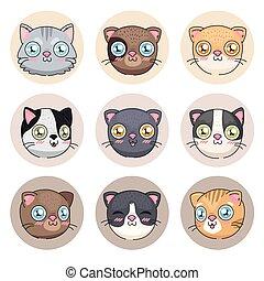 icono, caricaturas, gatos, colección