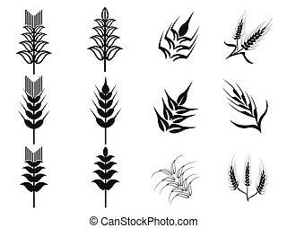 iconos de trigo negro