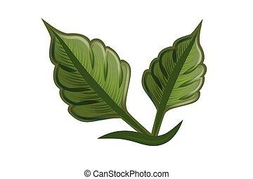 identidad, leafs, tarjeta, naturaleza, logotipo, salud, empresa / negocio