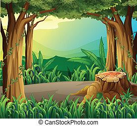 ilegal, apuntar, bosque