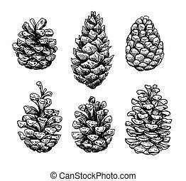 illustration., aislar, vector, pino, botánico, cono, mano, dibujado, set.
