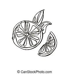 illustration., fondo., vector, hand-drawn, aislado, mitad, limón, blanco