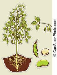 ilustración, aislado, plant., vector, verde, diseño, soja