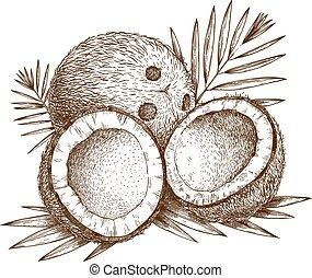ilustración, coco